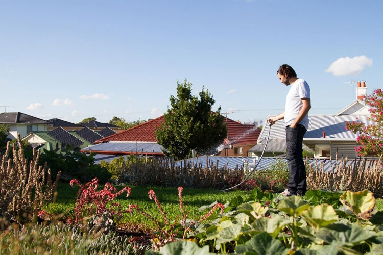 Emilio from Nest Architects waters his Florence Street House green roof in suburban Melbourne (via Lunchbox Architect)